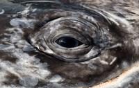 Фотограф потратил 25 лет на то, чтобы запечатлеть величественную красоту китов