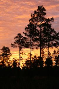 МС Дэвис — человек, который высадил 8 миллионов деревьев во Флориде, США