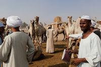 27 душераздирающих снимков с самого большого рынка верблюдов в Африке