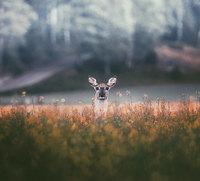16 незабываемых фото о том, как выглядит душа леса