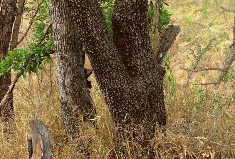 чего состоит дерево за которым будут прятаться евреи видео примеру