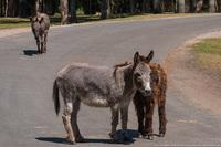 Каким должен быть правильный зоопарк?