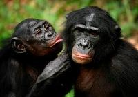 5 необычных сексуальных ритуалов животных
