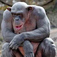 24 мозговзрывательных фото животных, лишившихся своей роскошной шевелюры