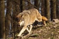 16 способов поближе познакомиться с дикими животными в Канаде