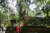 Бали. Лес обезьян