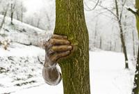 В 1968 году бронзовую скульптуру прикрепили к дереву в Далласе