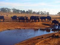 Без него они умрут: кениец каждый день возит воду изнывающим от жажды диким животным