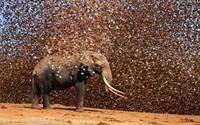 20 невероятных фотографий большого скопления животных, которые потрясают воображение