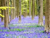 15 фантастически прекрасных цветущих полей со всех уголков мира