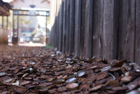 Оригинальная пробочная аллея в Техасе, созданная жителями небольшого городка