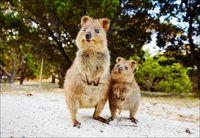 16 фото из Австралии, доказывающих, что любить эту страну лучше на расстоянии