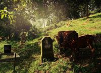 Коллекция кладбищ мира