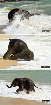 10 чудных фото слонят, которые заставят вас улыбаться до ушей