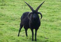 10 животных, которых сама природа сделала звездами хардкора