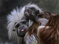 19 удивительных эмоций животных, которые не нуждаются в пояснениях