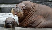 16 животных, которые очаровательны с любого ракурса и в любом настроении