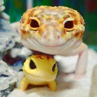 Геккон и его маленькая игрушечная копия покорили весь мир