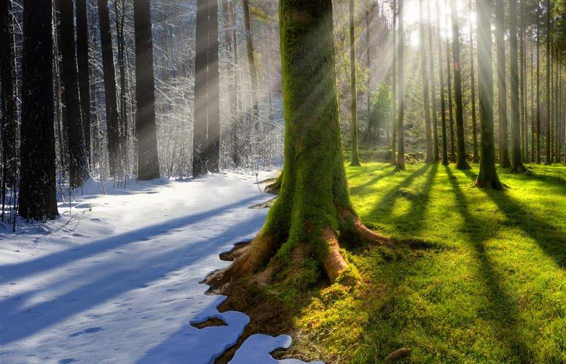Картинки по запросу климат