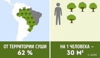 Сколько деревьев приходится на душу населения в разных странах мира