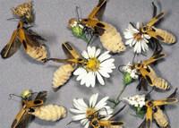 Грибы-паразиты превращают насекомых в привлекательных зомби