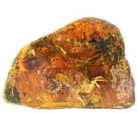Птенец-ровесник динозавров сохранился в янтаре