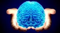 Ученые научились «читать» целые предложения из мыслей человека