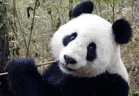 8 животных, которые находятся на грани исчезновения из-за изменения климата