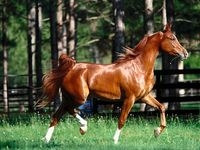 У всех лошадей в мире оказались общие предки