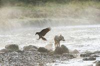 Фотограф запечатлел редких морских волков, которые живут в океане и плавают часами