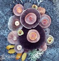 10 бесподобных фото, демонстрирующих волшебную красоту грибов