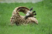 Интересные факты о сне в животном мире