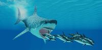 Почему вымерли самые большие в истории акулы
