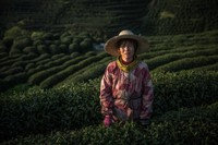 Зеленые моря плантаций Китая, где производят четверть всего чая в мире