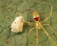 Сколько живут пауки