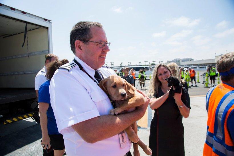 Компания Southwest предоставила самолет домашним животным, осиротевшим из-за «Харви»