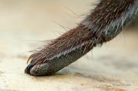 Выяснилось, что у пауков на лапах есть крошечные когти