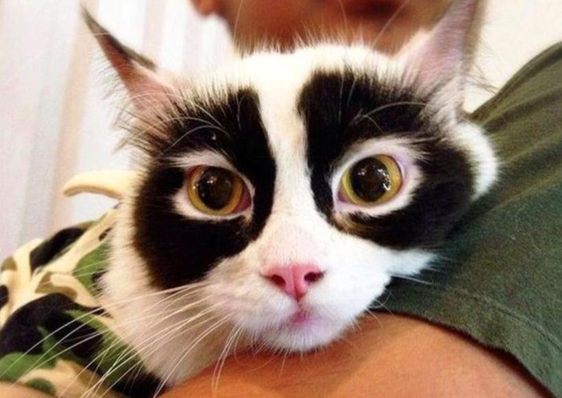 10 кошек со всех концов мира с самым удивительным окрасом
