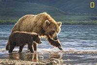 Самые яркие фото природы, претендующие на победу в конкурсе National Geographic 2017