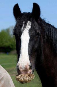 Если стало грустно, просто вспомните, что у лошадей могут расти усы