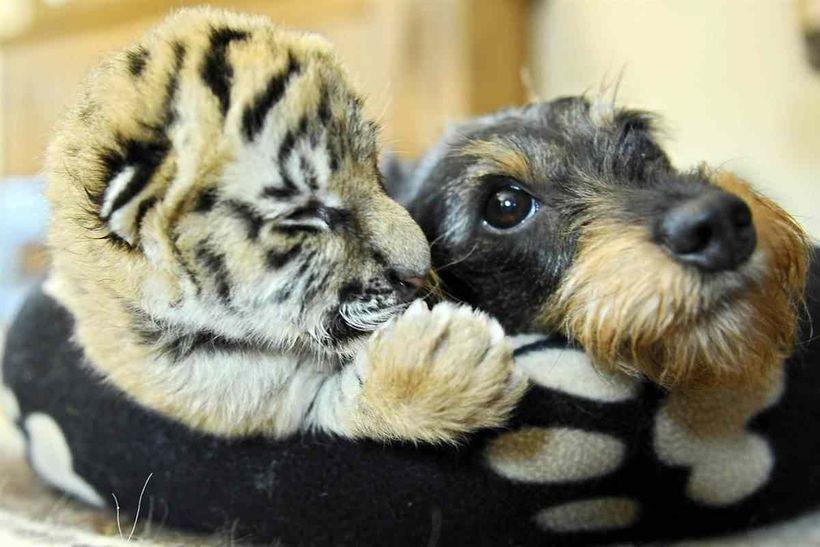 32 трогательные фотографии животных: несмотря на отличия, они могут дружить