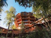 18 самых невероятных домов на деревьях, в которых сразу хочется очутиться