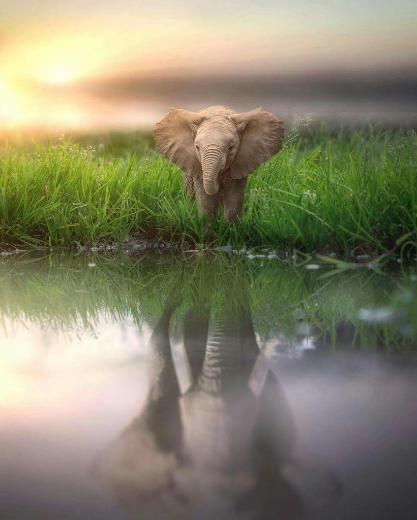 10 потрясающих кадров о том, как выглядел бы мир, если бы животные были гигантскими
