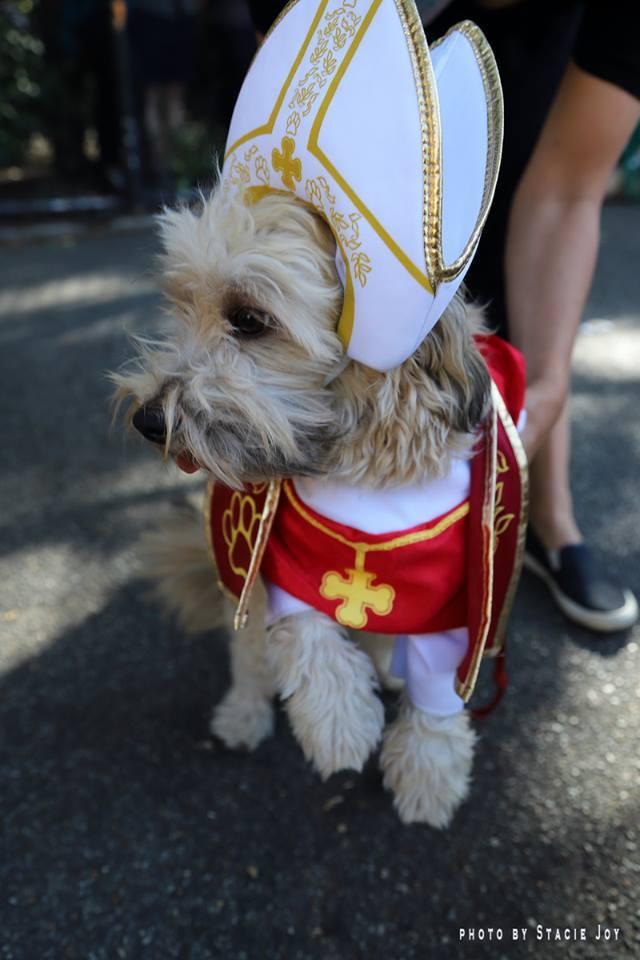 Самое милое мероприятие осени: парад собак в честь Хэллоуина