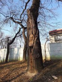 Румынский художник превращает деревья в удивительные скульптуры с помощью бензопилы