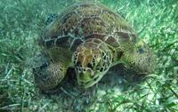 Аквапарк майя, танцы в воде и снорклинг с гигантскими черепахами в Мексике