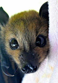10 снимков, доказывающих, что летучих мышей не надо бояться