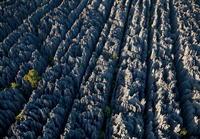 Загадка возникновения каменного леса на Мадагаскаре