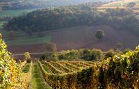 Бургундия — виноградные плантации