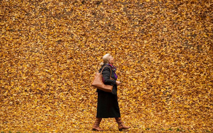 Фото, после которых никакой зимы не хочется: осень в снимках лучших фотографов года